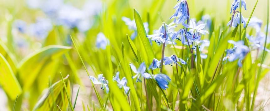 Wiosna - fotograf Zielona Góra